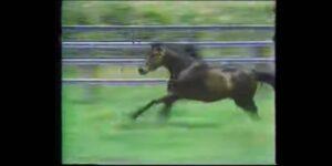 【ネタ】マルゼンスキーって本当に凄い馬だったんだな