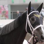 【ネタ】競馬実況がカレンモエちゃんをカレンチャンちゃんと間違ってて草
