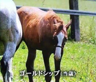 【ネタ】史実ゴールドシップさんは種牡馬として大成できそうなの?